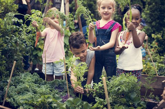 Pupils Budding Attempts to Grow a Garden of Sustainability